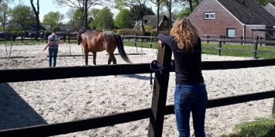 Paardencoaching in drenthe
