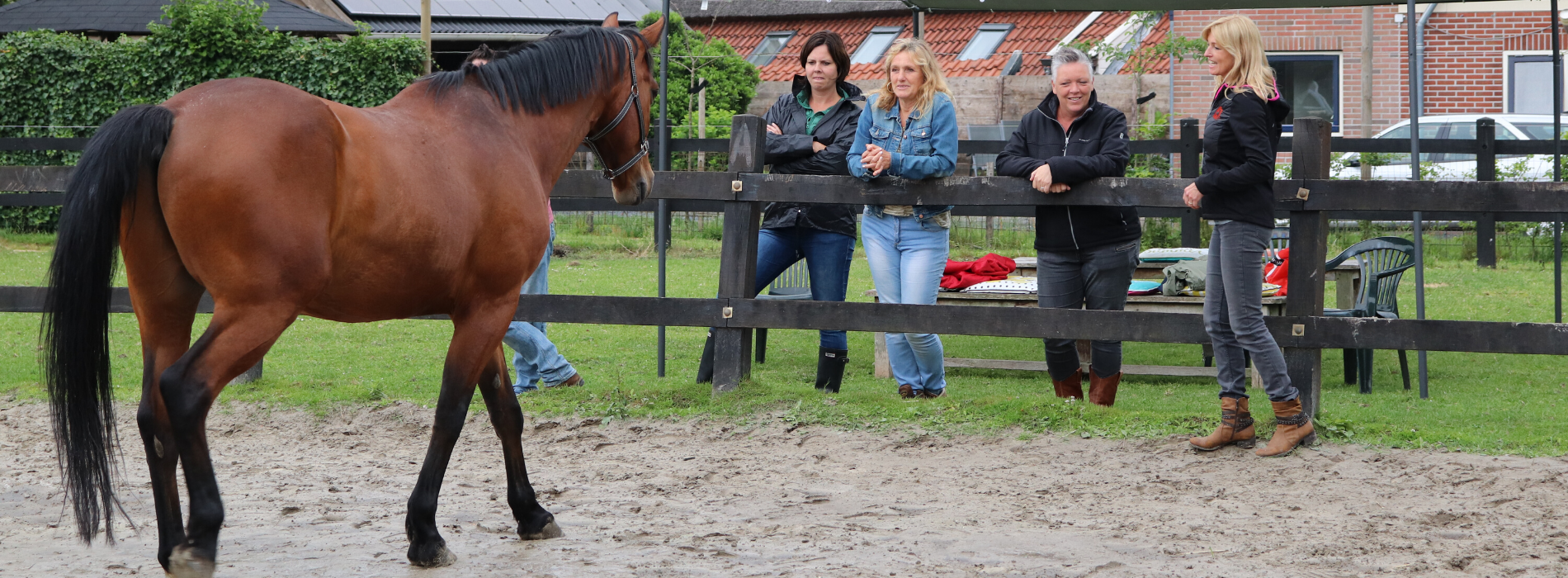 Bedrijfstraining Cosis paardencoaching